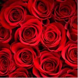 Τριαντάφυλλα για τον Αγ.Βαλεντίνο